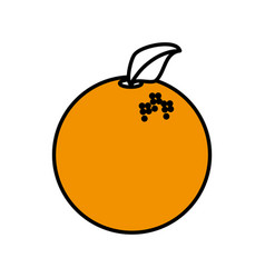 orange fruit healthy harvest image vector image