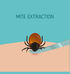 How to remove mite insect parasitic encephalitis vector