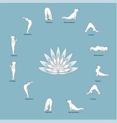 bear yoga vector image