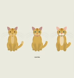 3 red tabby vector