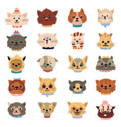 cats emotions cute funny kitten faces pets vector image
