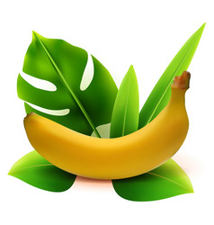 Realistic 3d banana fruit with leaves vector