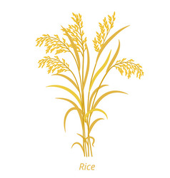 Rice plant bunch orange ripe and dry grass vector