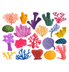 Sea coral on white background vector