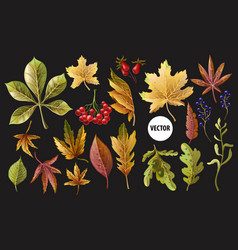 set of autumn yellow leaves and berries vector image