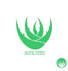 Aloe Abstract green plant vector image vector image