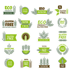 gluten free fresh product emblem for eco farm vector image