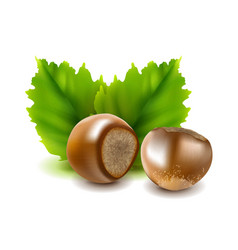 photo-realistic hazelnuts vector image