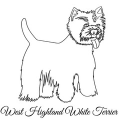 West highland white terrier dog coloring vector