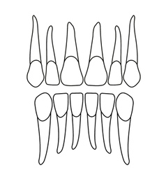 front tooth on white vector image