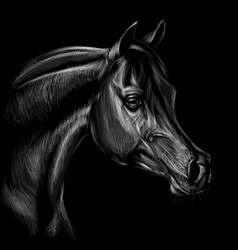 arab horse graphic hand-drawn portrait a horse vector image