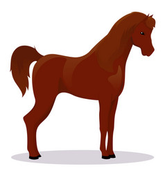 Arabic thoroughbred horse vector