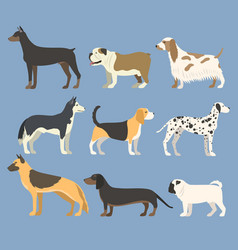 dog pet character bread in flat style puppy pet vector image
