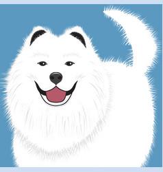 Dog samoyed buddy puppy vector