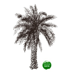 Hand drawn palm tree vector