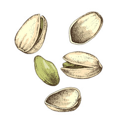 hand drawn pistachio nuts falling vector image