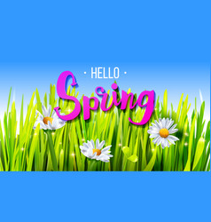 hello spring banner with grass and chamomile vector image