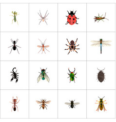 Set of bug realistic symbols with sting bug ant vector