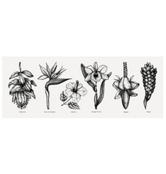 tropical flowers sketches collection e vector image