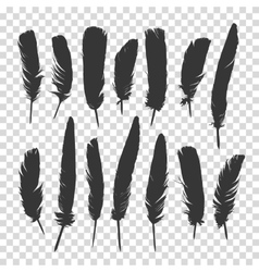 Hand drawn feathers set a transparent background vector image vector image