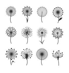 dandelion flowers with fluffy seeds black floral vector image vector image