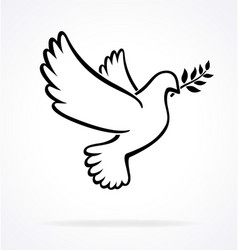 beautiful white peace dove outline vector image