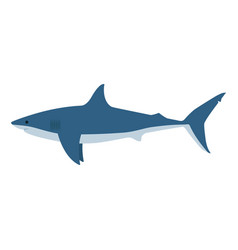 dangerous great white shark vector image