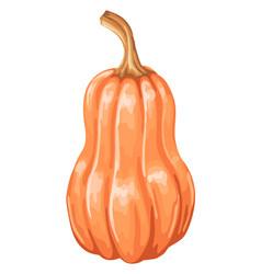 autumn ripe pumpkin vector image