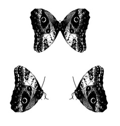 black and white retro butterfly eps10 vector image