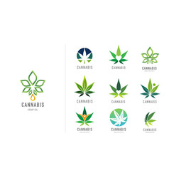 Cannabis leaf medical marijuana cbd oil symbol vector