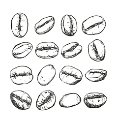 Coffee bean Isolated Hand drawn sketch vector image