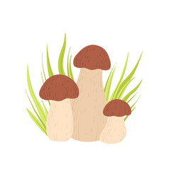 forest porcini edible mushroom and growing grass vector image