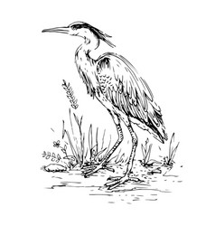 heron in vintage engraving style hand drawn vector image