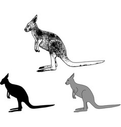 Kangaroo sketch and silhouette vector