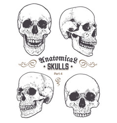 anatomical skulls set vector image vector image