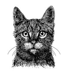 Cat 05 vector image vector image