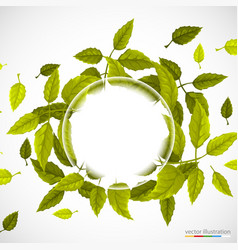 Beautiful green circle of leaves vector