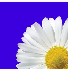 Daisy Flower On A Blue Background vector