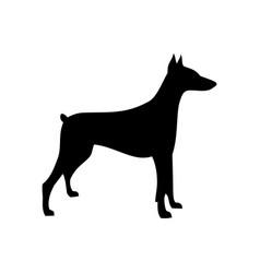 Dog doberman vector