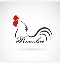 rooster on white background farm animals vector image