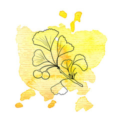 Branch ginkgo at watercolor background vector