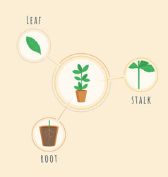 plant structure banner template biology vector image