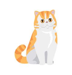 Red exotic cat flat design vector