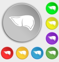 Liver icon sign Symbol on eight flat buttons vector image vector image