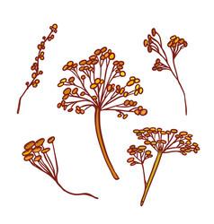 Autumn different inflorescences dry grass vector
