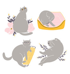 cute british shorthair cat collection 5 vector image