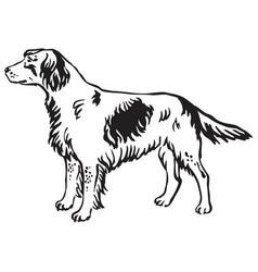 decorative portrait of dog small munsterlander vector image