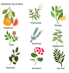 Large set popular essential oils from which vector