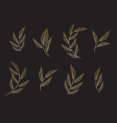 set elements set collection leaves herbs vector image