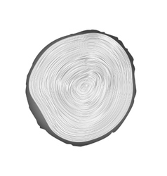 Wood texture of cutted tree trunk vector